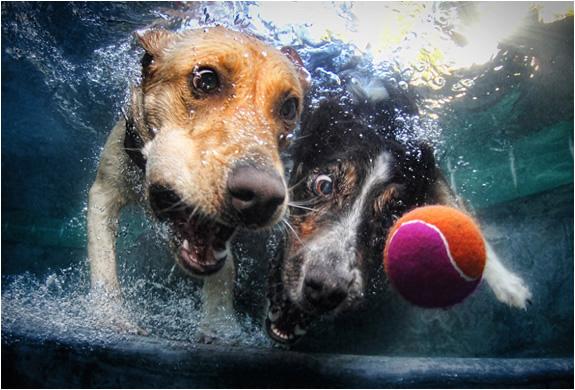 underwater-dogs-seth-casteel-3